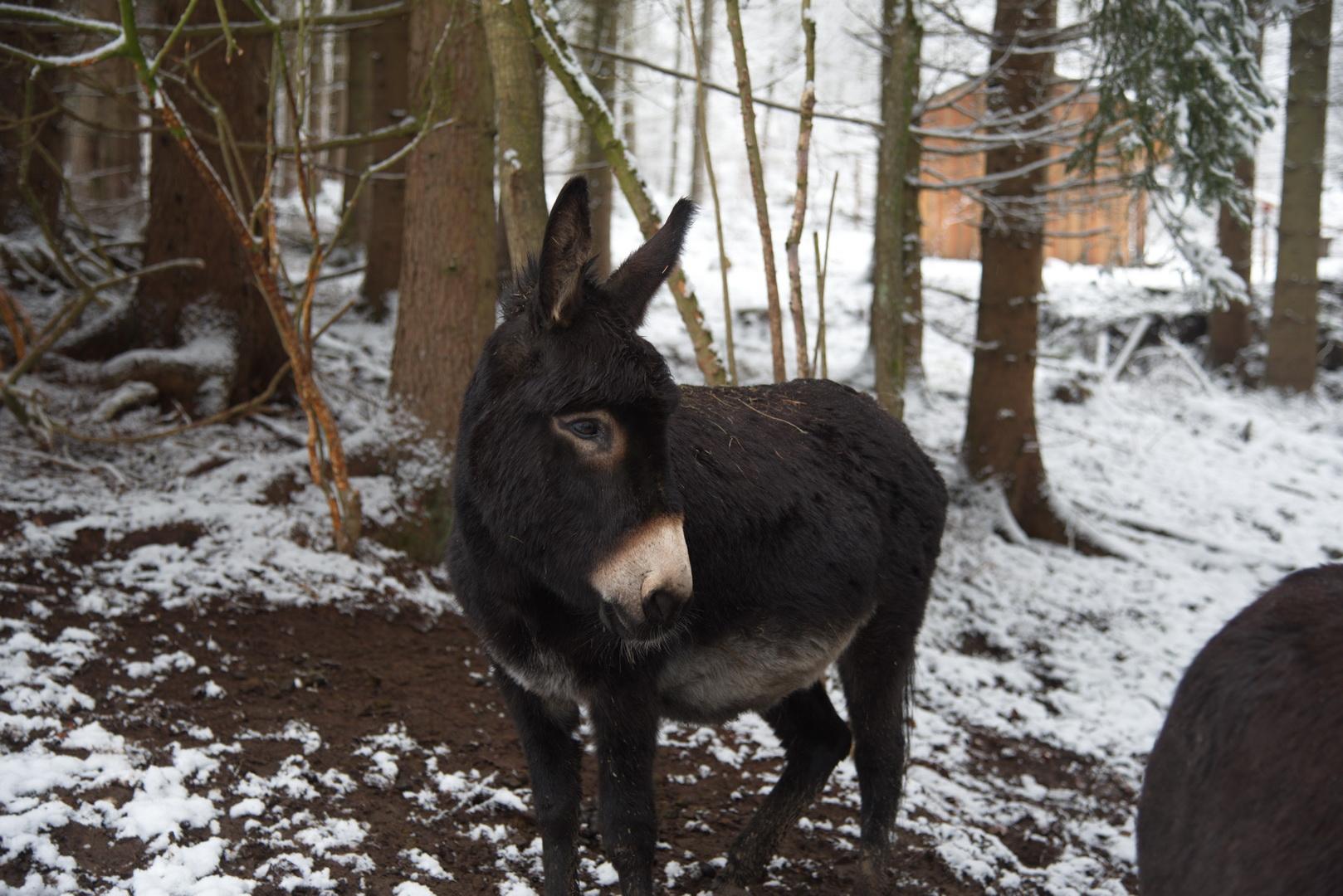 Beliebt Bevorzugt Esel - Wildgehege Herborn @XL_22