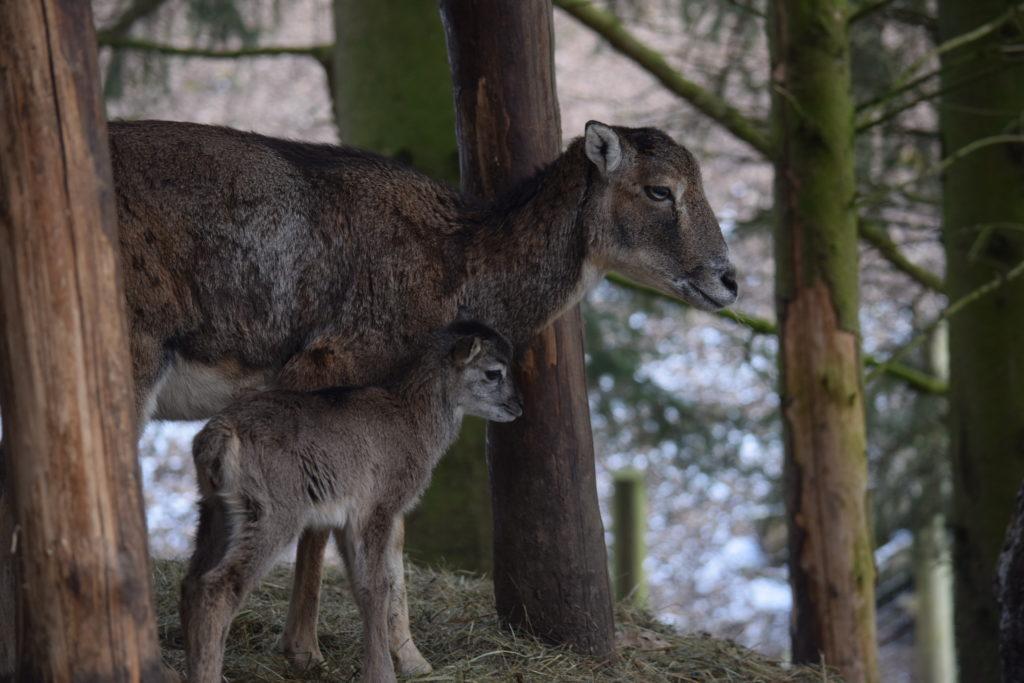 Mutter und Kind sind wohl auf