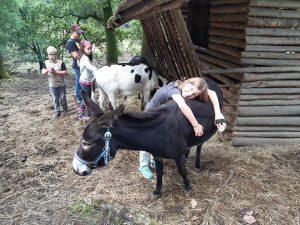 Ferienspaß im Wildgehege - Unsere Esel genießen die Streicheleinheiten